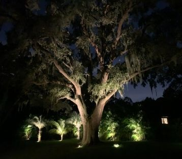 outdoor-landscape-lighting-in-tampa